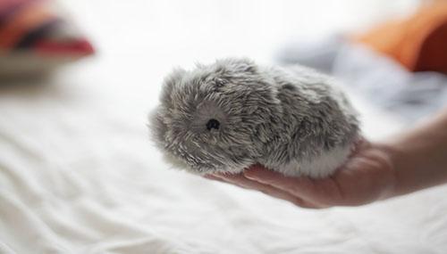 Moflin - a robot pet